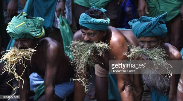 Tamil Nadu farmer pretending to eat grass during a protest at Jantar Mantar on April 17 2017 in New Delhi India Around 84 farmers from Tamil Nadu...