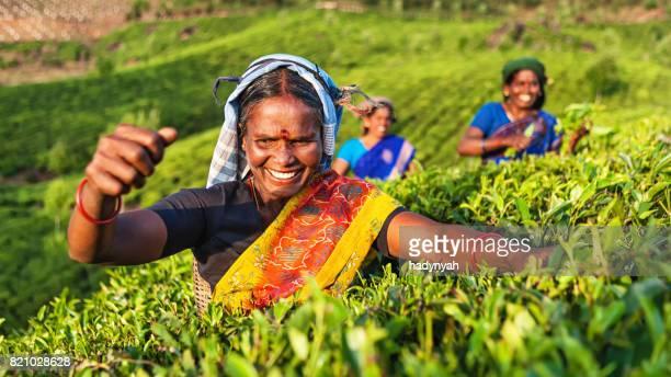 Tamil plukkers theebladeren verzamelen op plantage, Zuid-India