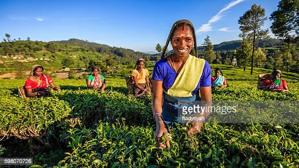 Tamil Frauen plucking Teeblätter auf plantation, Ceylon
