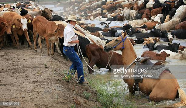 Tammy Hughes of QLD waters her horse in an irrigation ditch while drovong a herd of cattle along a stock route between Boomi and Mungindi in northern...