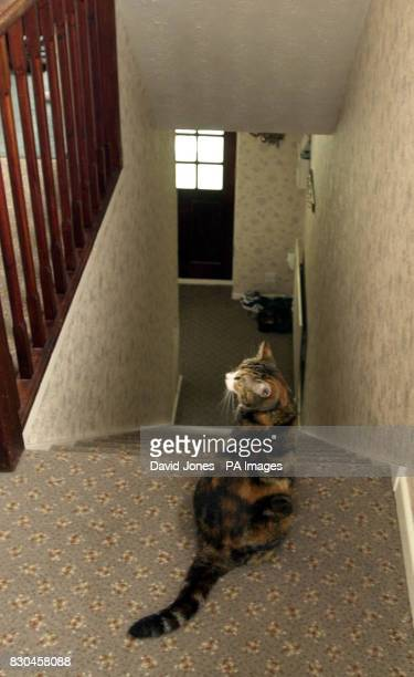 Tamworth murder victim Heather Tell's cat 'Bonnie' waits at the top of the stairs at the family home Heather would have celebrated her 18th birthday...