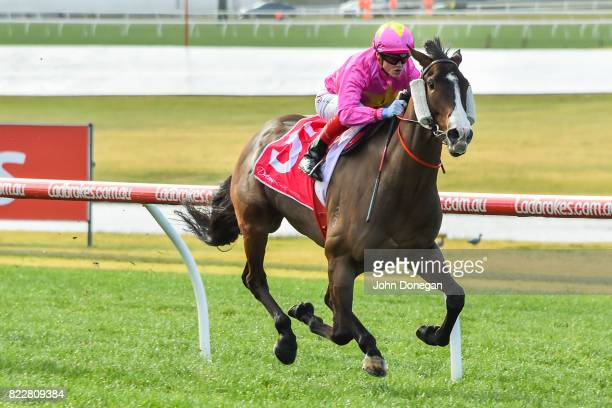 Tan Tat Trusting ridden by Craig Williams wins the Dream Thoroughbreds Plate at Ladbrokes Park Hillside Racecourse on July 26 2017 in Springvale...