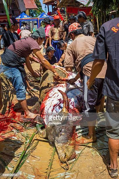 Tana Toraja Buffalo Sacrifice Funeral Ritual