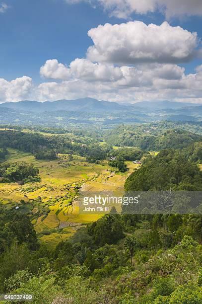 Tana Toraja countryside with rice terraces