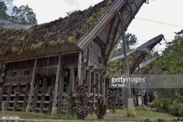indonesien; sulawesi, tanah toraja , in lemo, tongkonans) - rantepao stock photos and pictures