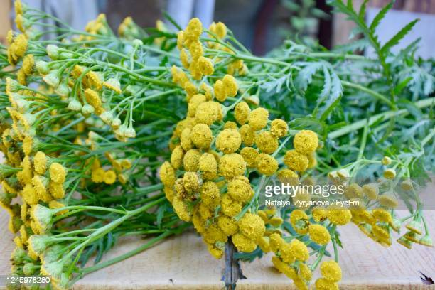tancy flowers - tansy stock pictures, royalty-free photos & images