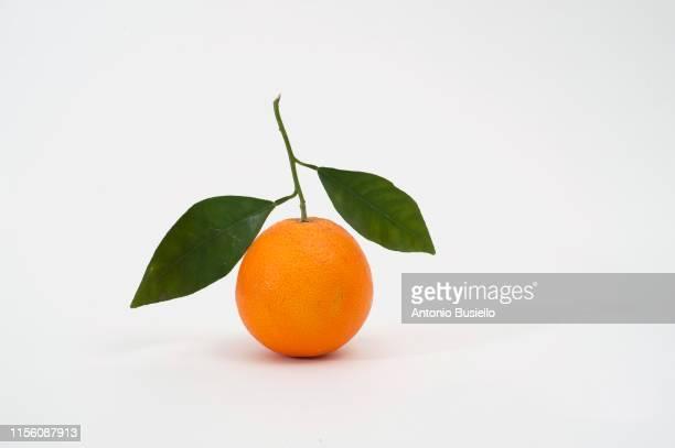 tangerine - ミカン ストックフォトと画像