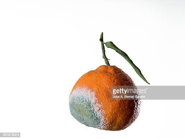 Tangerine with mould, close-up