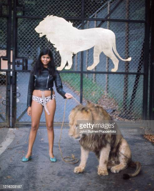 Tania Duckworth model child star actress and singer from Ceylon poses with lion Marquess in bikini bottoms and a leather jacket circa October 1967 at...