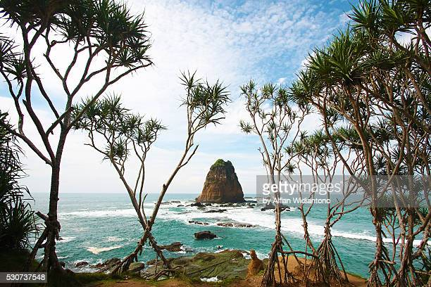 tanjung papuma beach - east java province stock photos and pictures