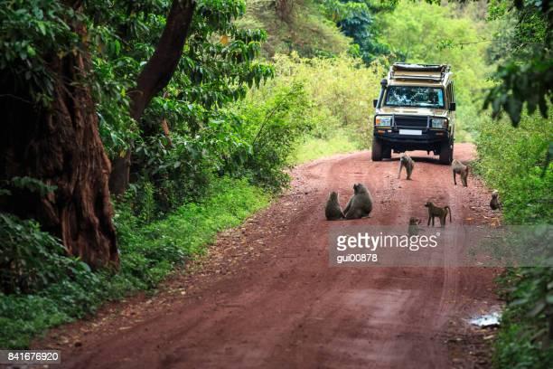 safari de tanzanie - tanzania fotografías e imágenes de stock