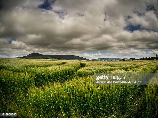 Tap O' Noth hill and field, Aberdeenshire Scotland