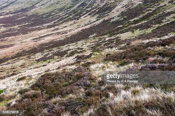 Tapestry of moorland colours