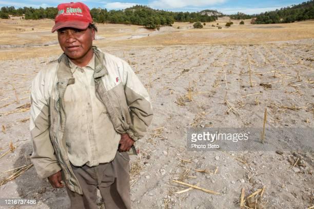 un agricultor de raramuri (tarahumara) en un campo de maíz completamente árido en el norte de méxico - tarahumara fotografías e imágenes de stock