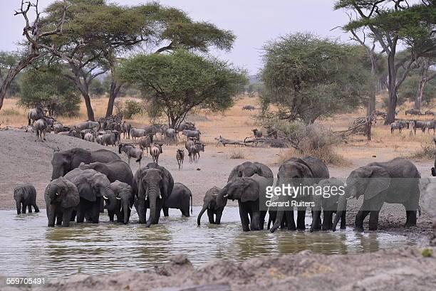 tarangire national park, tanzania - tarangire national park stock pictures, royalty-free photos & images