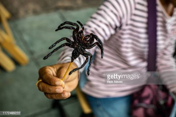 tarantula shish kebab - fried stock pictures, royalty-free photos & images