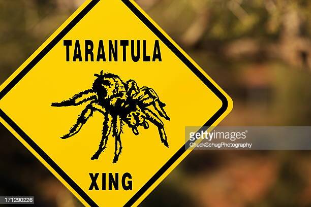 Tarantula Spider Arachnid Aphonopelma chalcodes
