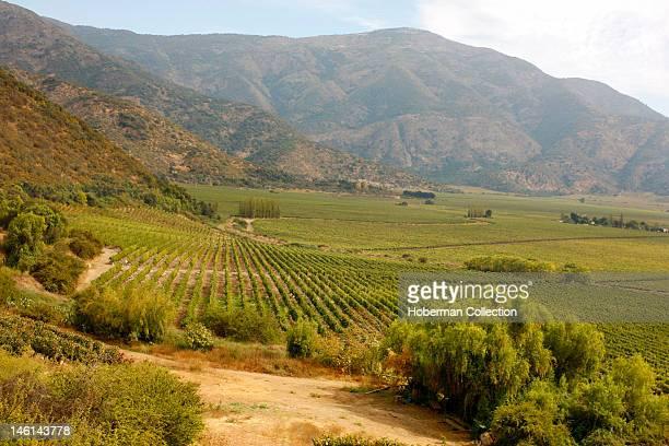 Tarapaca Vineyards Chile