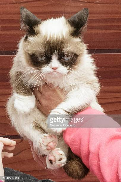 Tardar Sauce aka 'Grumpy Cat' and owner Tabatha Bundesen make a personal appearance at the Mashable House during the 2014 SXSW Music, Film +...