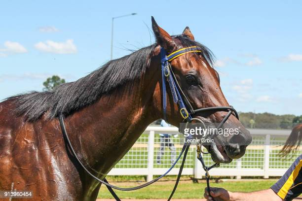 Tardis after winning the Sale Signtorque FM Maiden Plate at Sale Racecourse on February 04 2018 in Sale Australia
