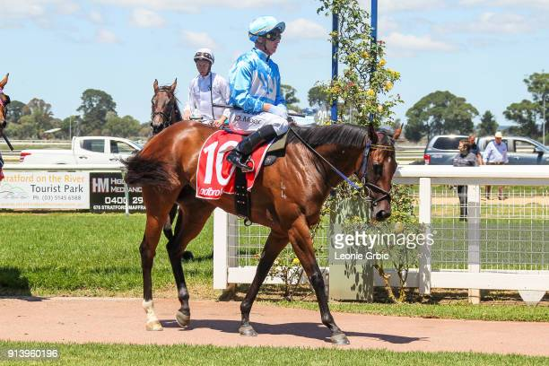 Tardis ridden by Daniel Moor returns after winning the Sale Signtorque FM Maiden Plate at Sale Racecourse on February 04 2018 in Sale Australia