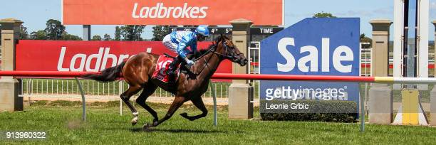 Tardis ridden by Daniel Moor wins the Sale Signtorque FM Maiden Plate at Sale Racecourse on February 04 2018 in Sale Australia