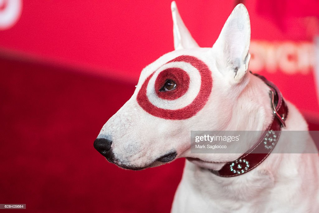 Target's official Bull Terrier mascot 'Bullseye' attends Target's Toycracker Premiere Event at Spring Studios on December 7, 2016 in New York City.
