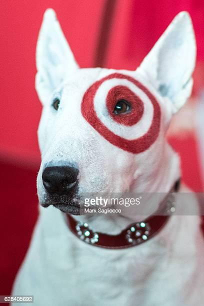 Target's official Bull Terrier mascot 'Bullseye' attends Target's Toycracker Premiere Event at Spring Studios on December 7 2016 in New York City