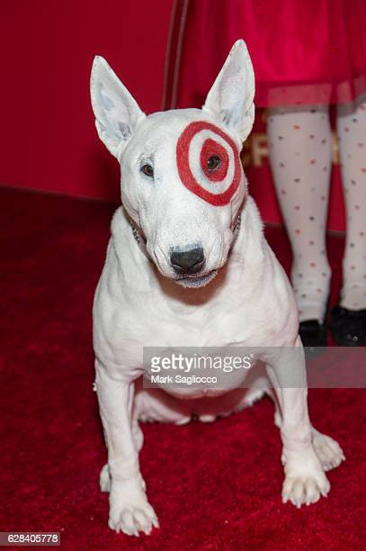 Target bullseye dog stock photos and pictures getty images What kind of dog is the target mascot