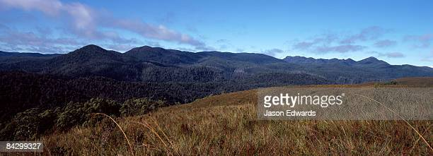 Buttongrass Moorland and Tall Wet Eucalypt forested mountain slopes.