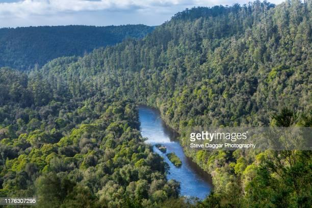 tarkine wilderness - tasmania stock pictures, royalty-free photos & images