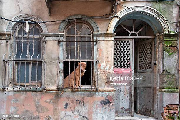 tarlabasi neighbourhood in istanbul, turkey - dog turkey stock pictures, royalty-free photos & images