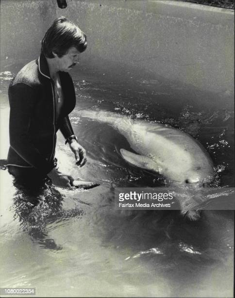 Taronge Zoo, Marine trainer Albert Van Evenbroeck pictured with the dolphin in the holding pool, at Taronga Zoo. Taronga Zoo has no dolphins at...