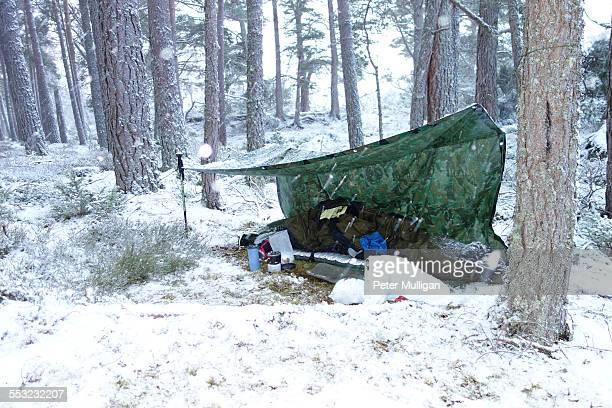 Tarpaulin camp in the woods