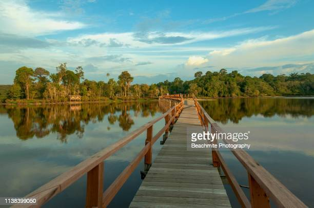 tasek merimbun, tutong, brunei - brunei stock pictures, royalty-free photos & images