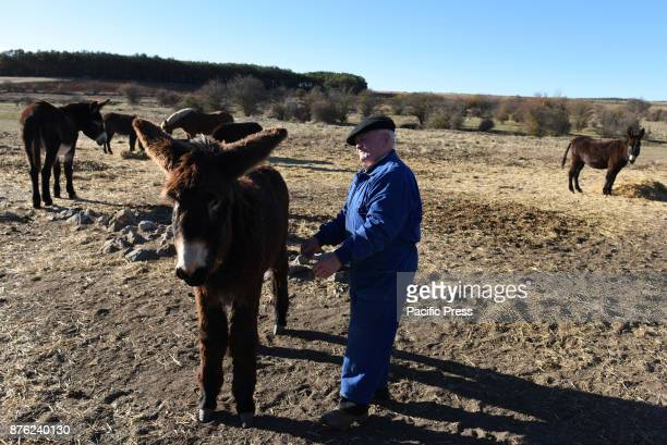 Tasio pictured with his donkeys near of the small village of Fuentelfresno north of Spain Tasio 84 yearsold is one of the last inhabitants of this...