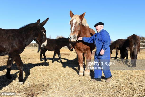 Tasio pictured with his horse and donkeys near of the small village of Fuentelfresno north of Spain Tasio 84 yearsold is one of the last inhabitants...