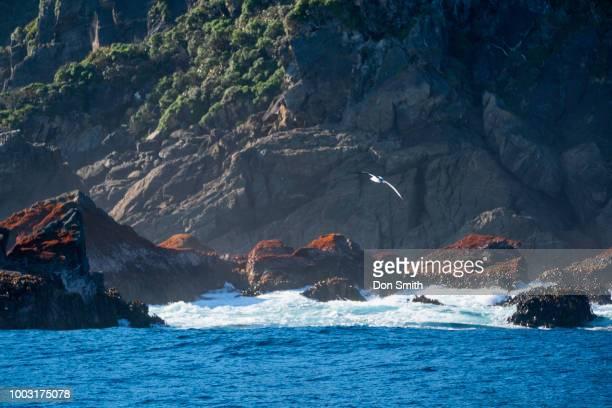 Tasman Sea and Doubtful Sound
