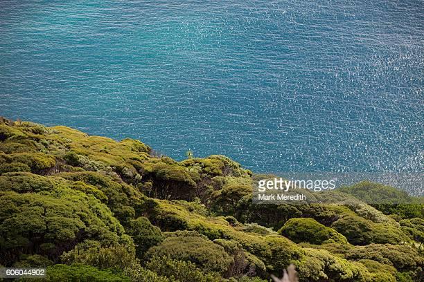 tasman sea and manuka bush on auckland's west coast - manuka stock photos and pictures