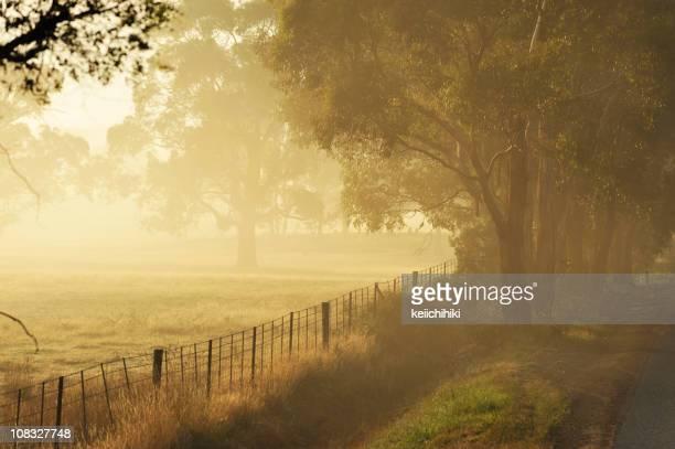 Tasmania landscape with fog