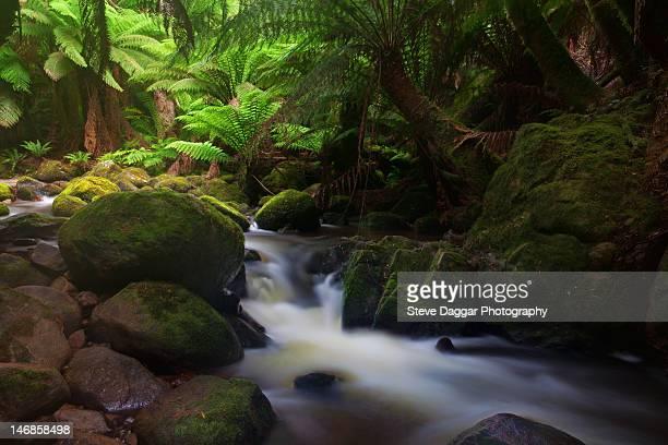 Tasmania rainforest