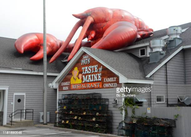 taste of maine restaurant, with a giant lobster on top of it, in woolwich, maine. - bo zaunders stock pictures, royalty-free photos & images