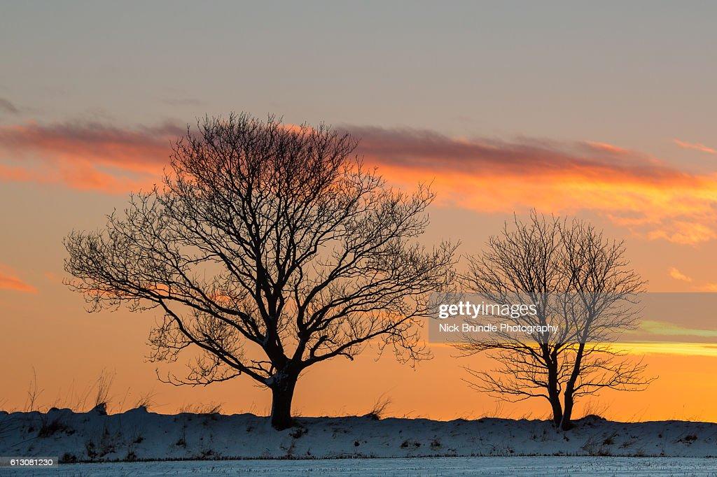 A taste of winter : Stock-Foto