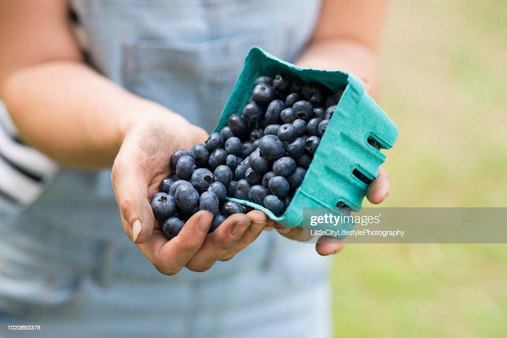 Tasty Blueberries : Stock Photo