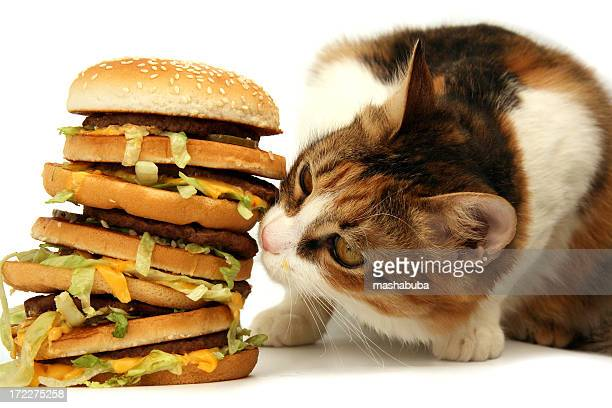 tasty dinner - fat cat stock photos and pictures