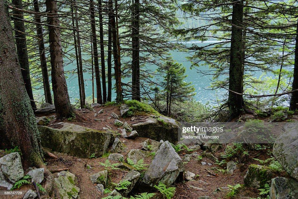 Tatra woods : Foto de stock