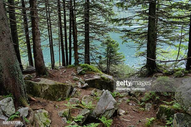 Tatra woods