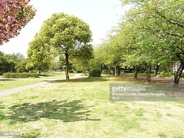 tatsumi park - japanese tree stock photos and pictures