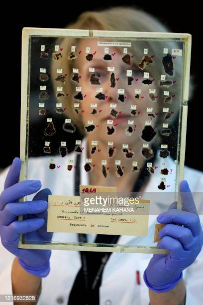 Tatyana Bitler, a conservator of the Israel Antiquities Authority , shows fragments of the Dead Sea Scrolls at their laboratory in Jerusalem on June...