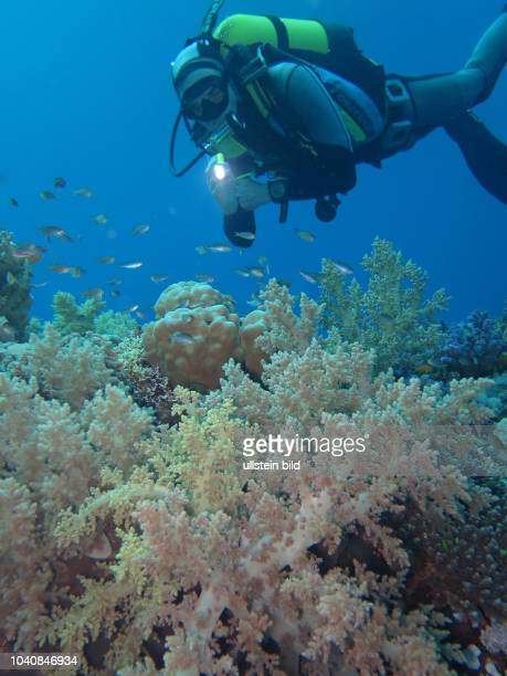 Taucher, Korallenriff, St. Johns Riff, Rotes Meer, Aegypten